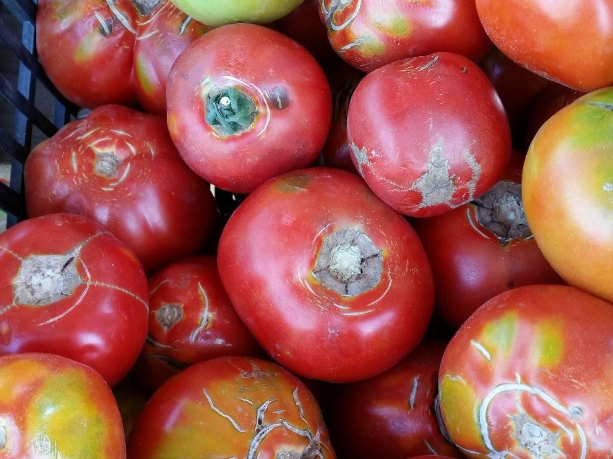 pomodori rovinati